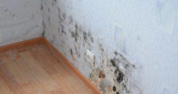 Как избавиться от плесени на стенах в квартире