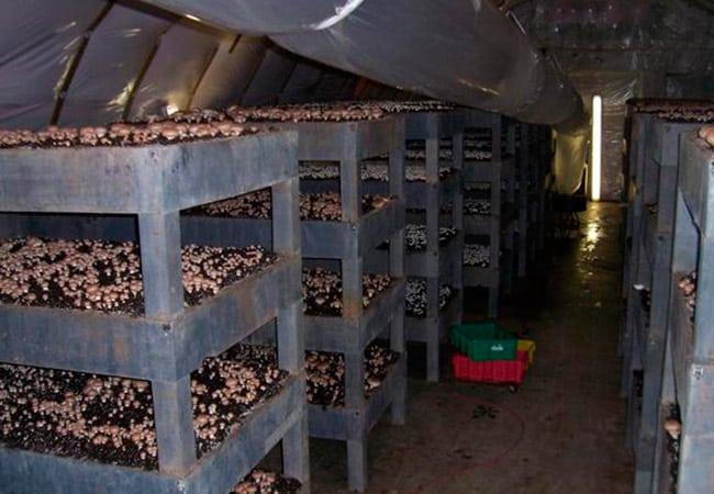 Как обустроить подвал | Выращивание грибов в подвале