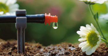 Как сделать капельный полив своими руками