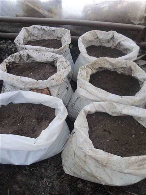 Грунт выносят в мешках на открытый воздух и периодических заносят их в теплое помещение.