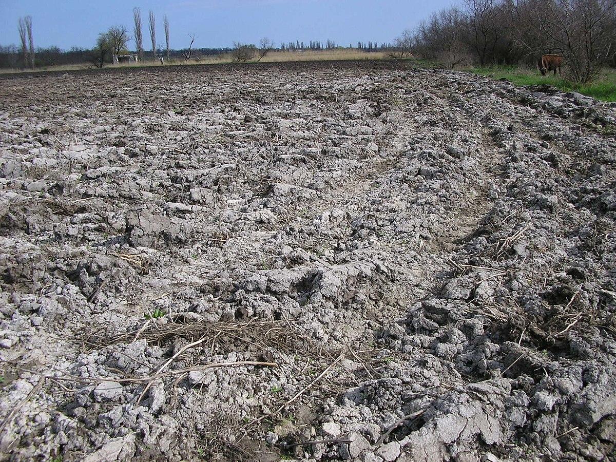 Вред слива воды из бассейна для почвы | Можно ли поливать водой из бассейна огород, газон, цветы