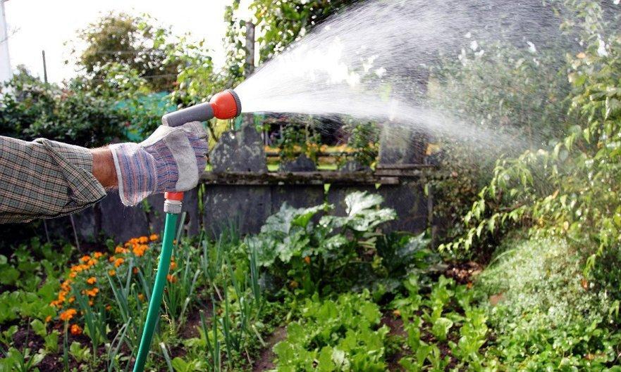 Какие элементы в воде вредны и полезны для растений | Можно ли поливать водой из бассейна огород, газон, цветы