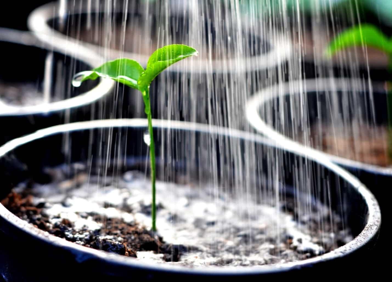 Как вода из бассейна повлияет на самочувствие растений | Можно ли поливать водой из бассейна огород, газон, цветы