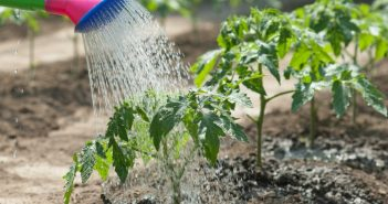 Можно ли поливать водой из бассейна огород, газон, цветы