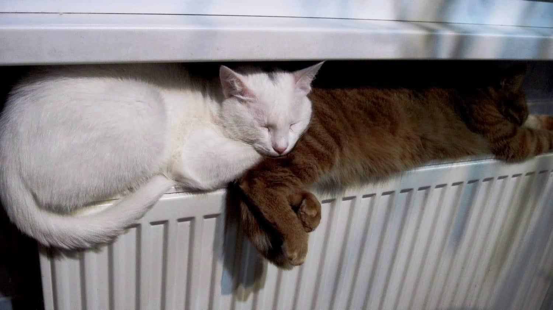 Отключение системы отопления | Как спустить воздух из радиатора отопления