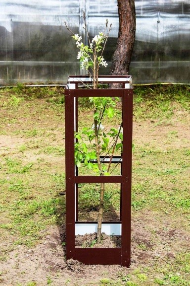 Защитные ограждения для деревьев | Как утеплить молодые плодовые деревья на зиму