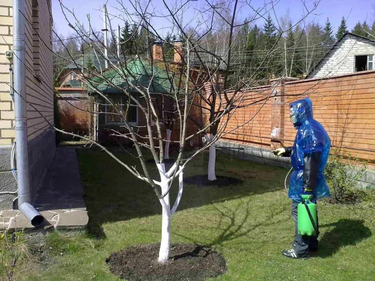 Подготовка деревьев к утеплению | Как утеплить молодые плодовые деревья на зиму