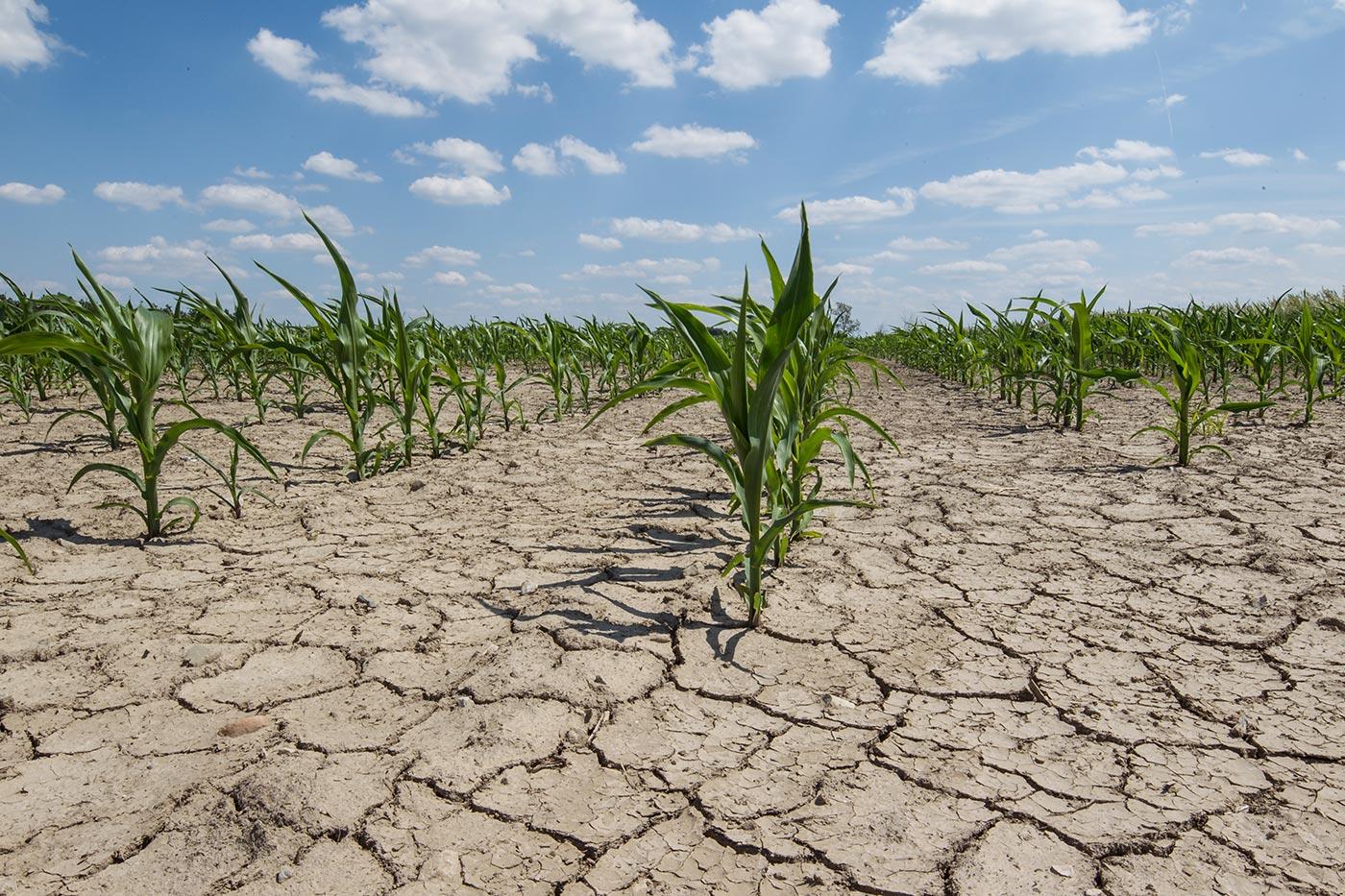 Что такое ветровая эрозия почв | Как можно защитить почву от выдувания ветром