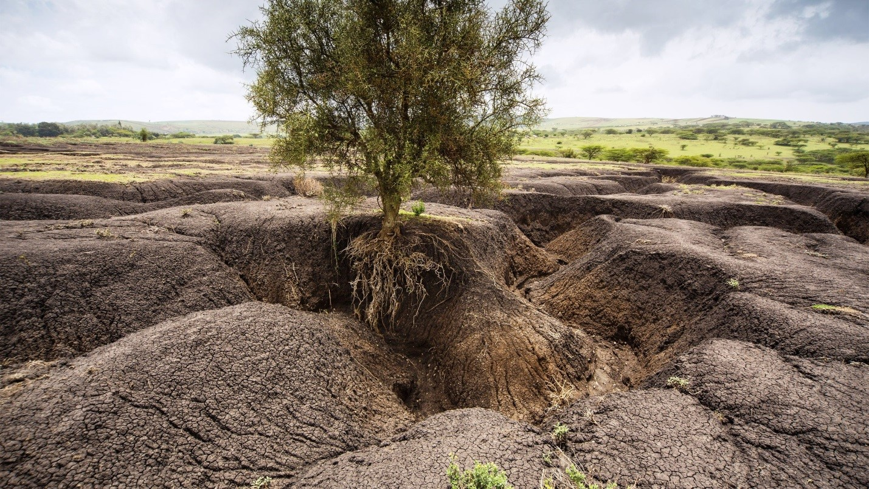 Враги плодородного слоя почвы | Как можно защитить почву от выдувания ветром